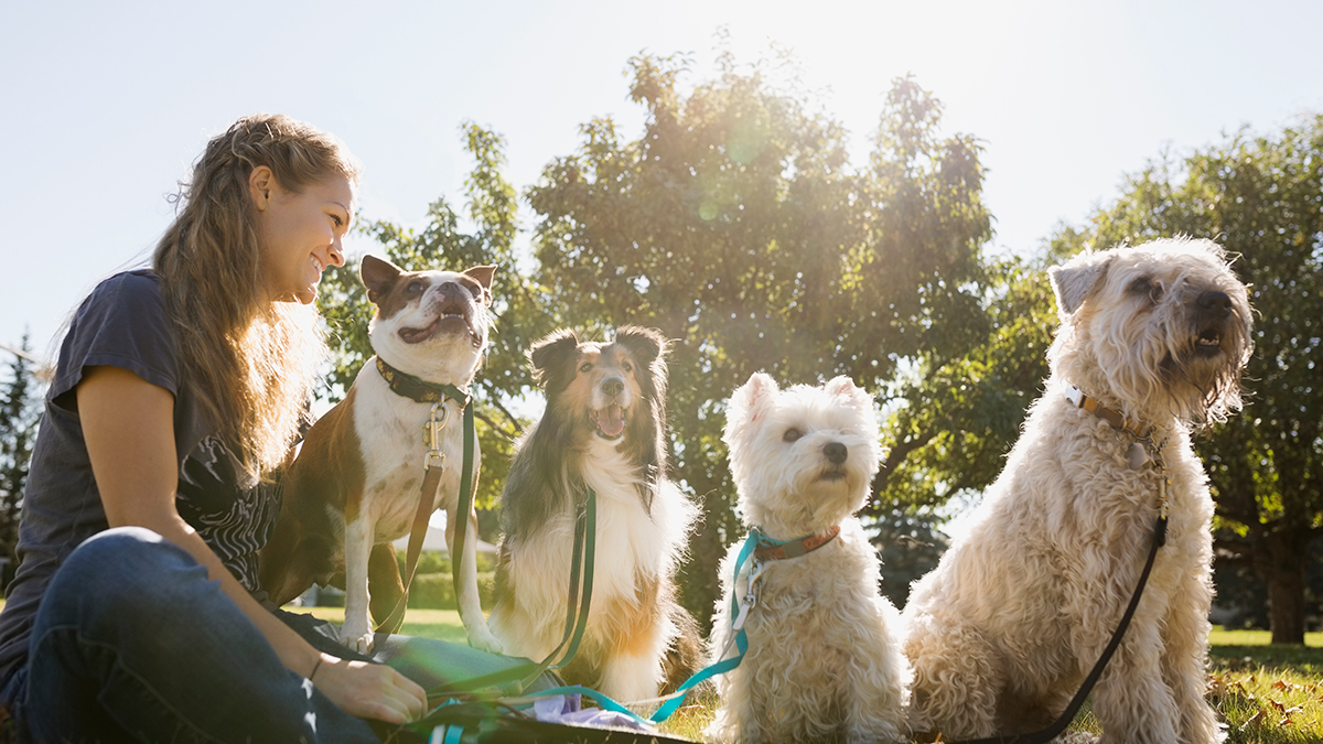 dog therapy for college students