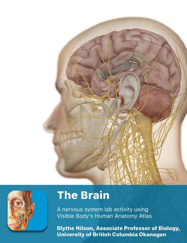 Lab_Activity_-_The_Brain.pdf - 1 PRE-LAB EXERCISES Open ...