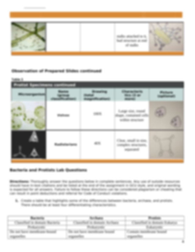 Bacteria, Archaea, and Protists Lab Worksheet.docx - Name ...