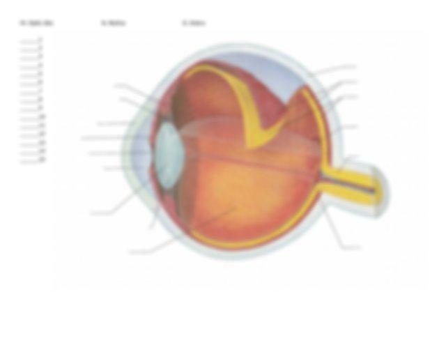 Eye Label Practice 2 - Chapter 8 Special Senses Name Label ...