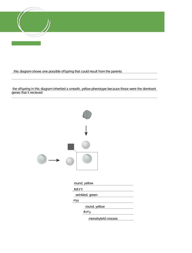 BIO_CA_CH12_Foundations.pdf (1).pdf - CHAPTER\u200212 ...