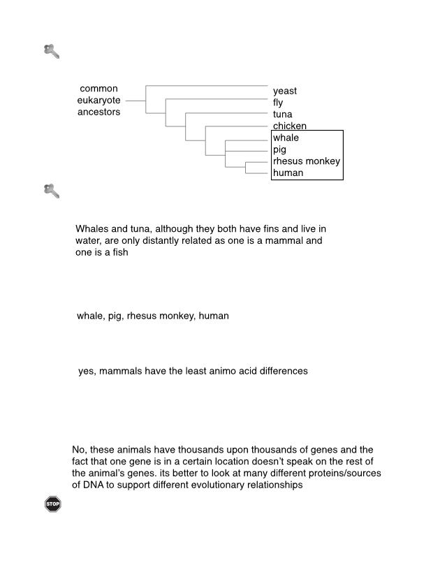 22 Phylogenetic Trees-S.pdf - Phylogenetic Trees How do ...