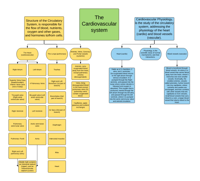 Cardiovasculr System Concept Map (Anatomy).pdf - Structure ...