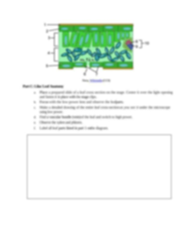 Leaf Anatomy Worksheet Answer Key.rtf - ITS JUST A LEAF ...
