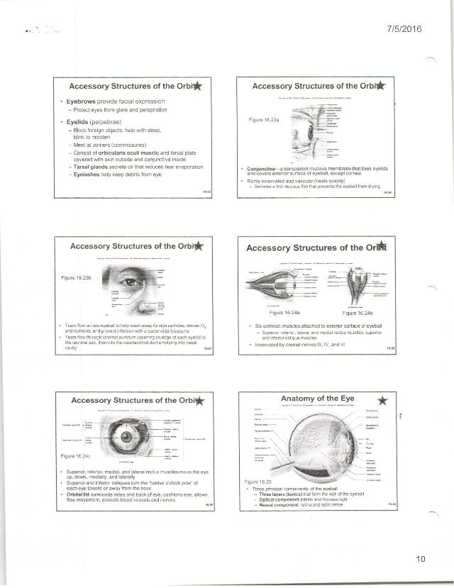 Chapter 16 Sense Organs.pdf - A Chapter 16 Lecture ...