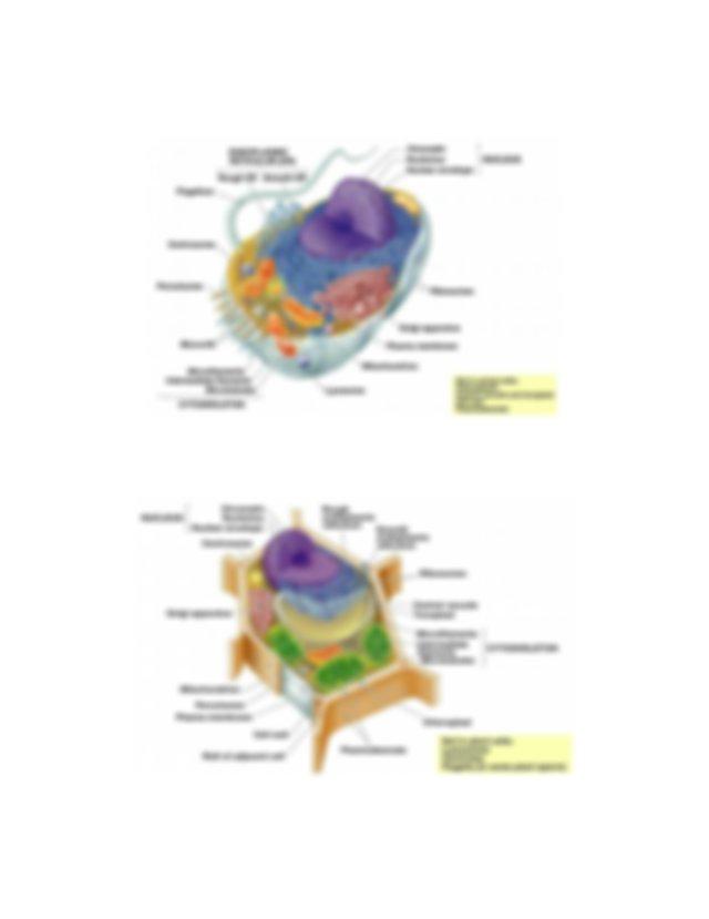 Comparing Prokaryotic And Eukaryotic Cells U2013 Principles Of Manual Guide