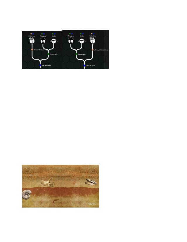 NOVA Evolution Lab.pdf - Evolution 101 1 C 2 C 3 C 4 The ...
