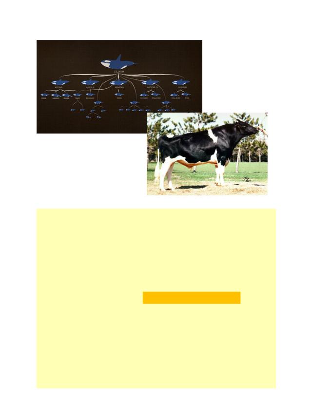 16 BIOL 1001 W2019 Mechanisms of Evolution (Genetic Drift ...