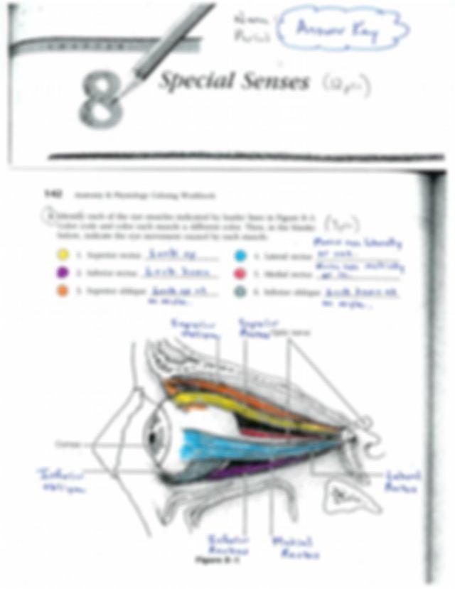 Eye-Review-Wkshts-Answer-Key - Special Senses(IQ-Pm 1 42 ...