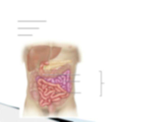 Maintaining elasticity in the anus