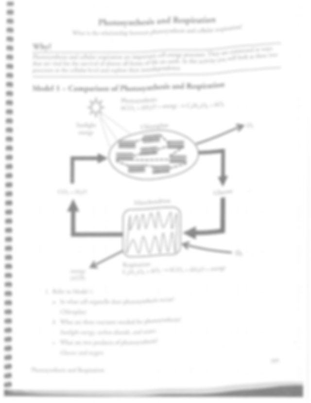 Respiration and Photosynthesis KEY - Photosynthesis and ...