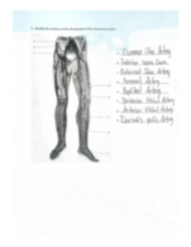 Unit 22 Anatomy of Blood Vessels Worksheet.pdf -   Course Hero