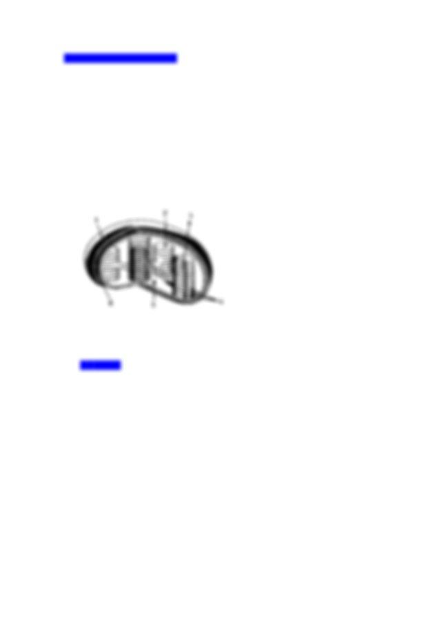 Perhatikan gambar susunan sel sel daun berikut ini ...