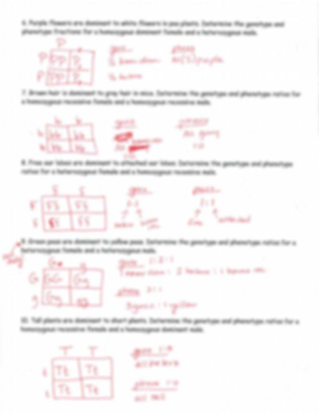 MORE Punnet Squares WS ANSWER KEY - J Nome Z 2 Q l 2 Date ...