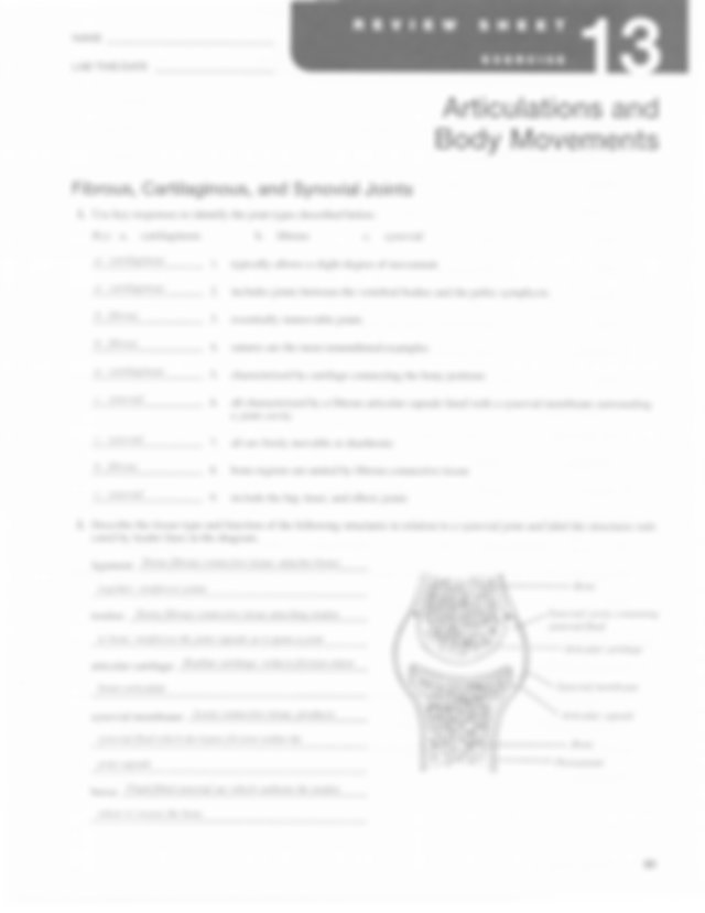 Review Sheet 13- Articulations And Body Movements
