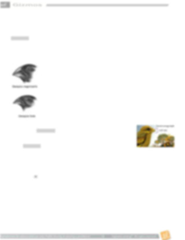 Rainfall_Bird_MetricSE.pdf - Name Date Student Exploration ...