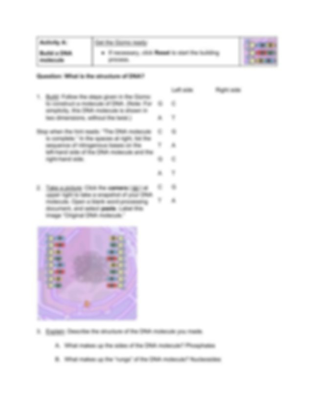 Student_Exploration_Building_DNA (1).pdf - Name Andrew ...
