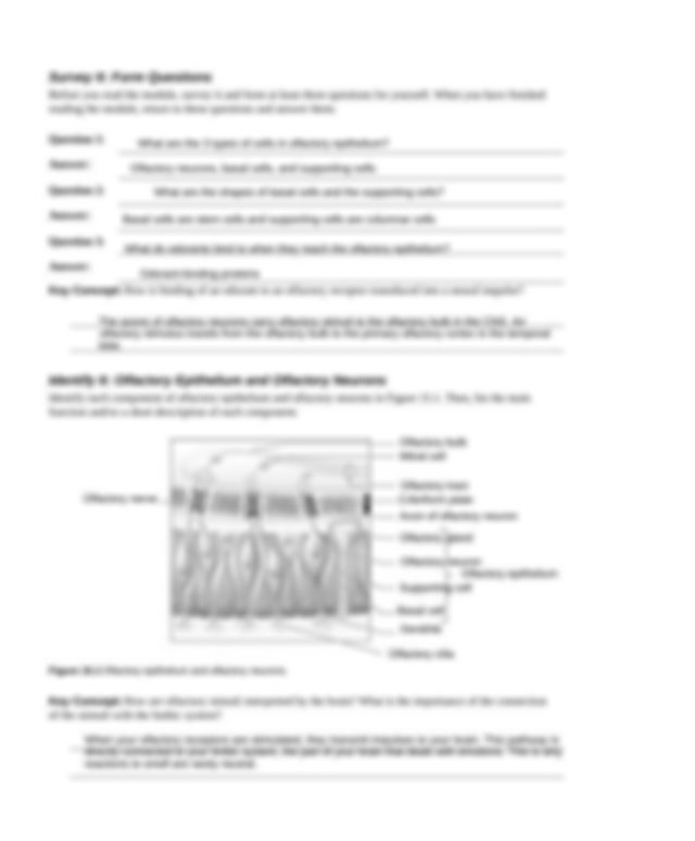 Ch 15 worksheet.docx - The Special Senses In previous ...