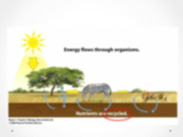 Bio20 - Unit A - Cycles.ppt - Unit A Energy Matter ...