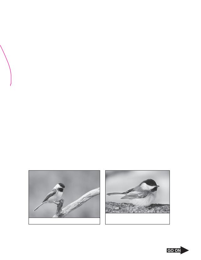 Arlett Escamilla - Kami Export - feathers, fat, and ...