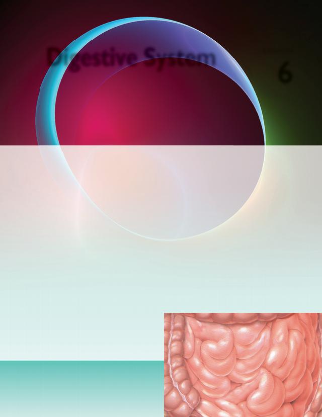 Chapter_6_Digestive_System).pdf - 5867_Ch06_127-178 12:11 ...
