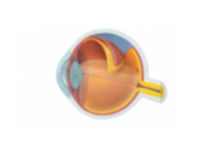 Eye Labeling Study Guide