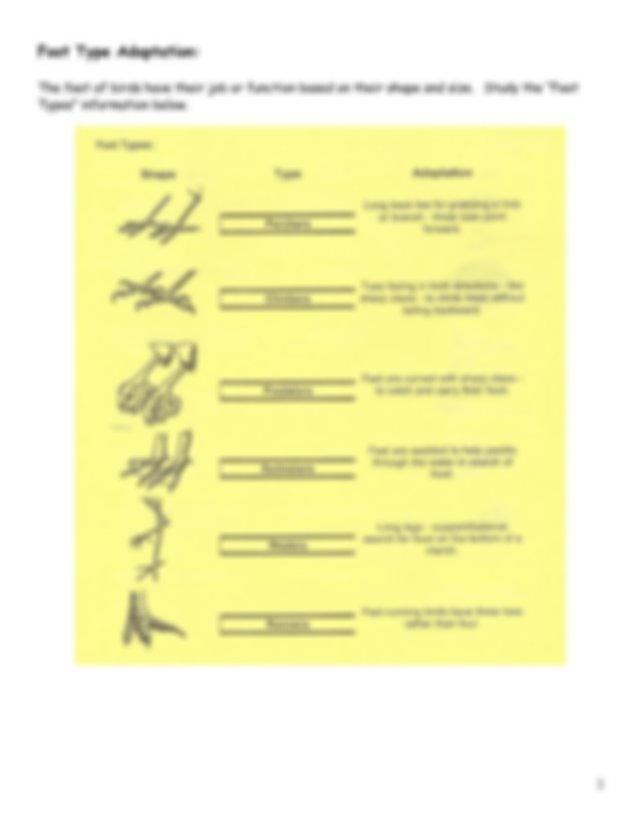 Bird+Activity.pdf - Bird Beaks and Feet Activity Beak Type ...
