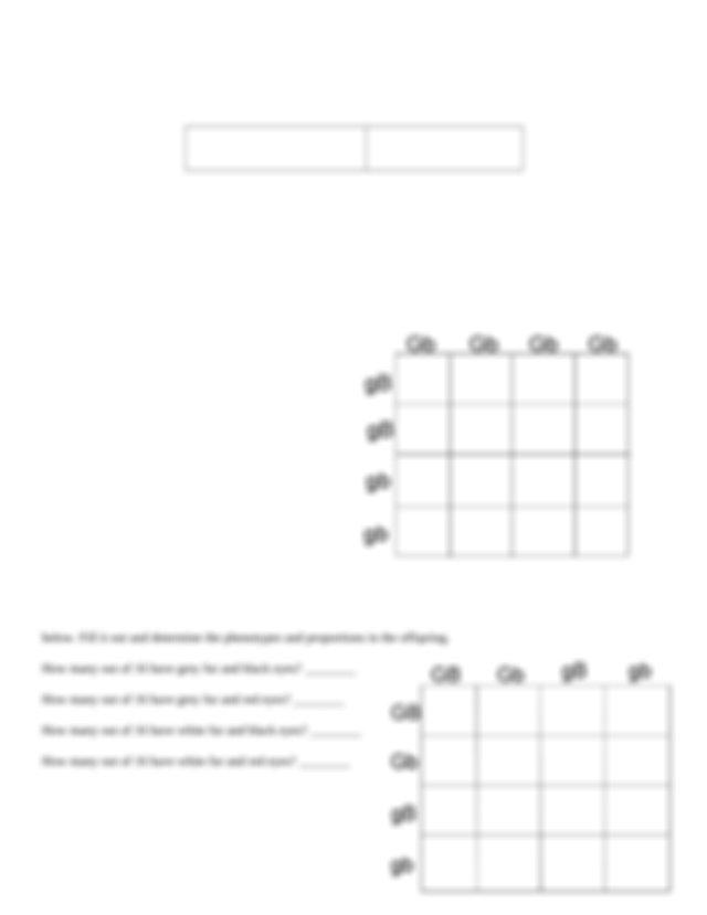 Dihybrid worksheet (1).doc - Genetic Crosses that Involve ...