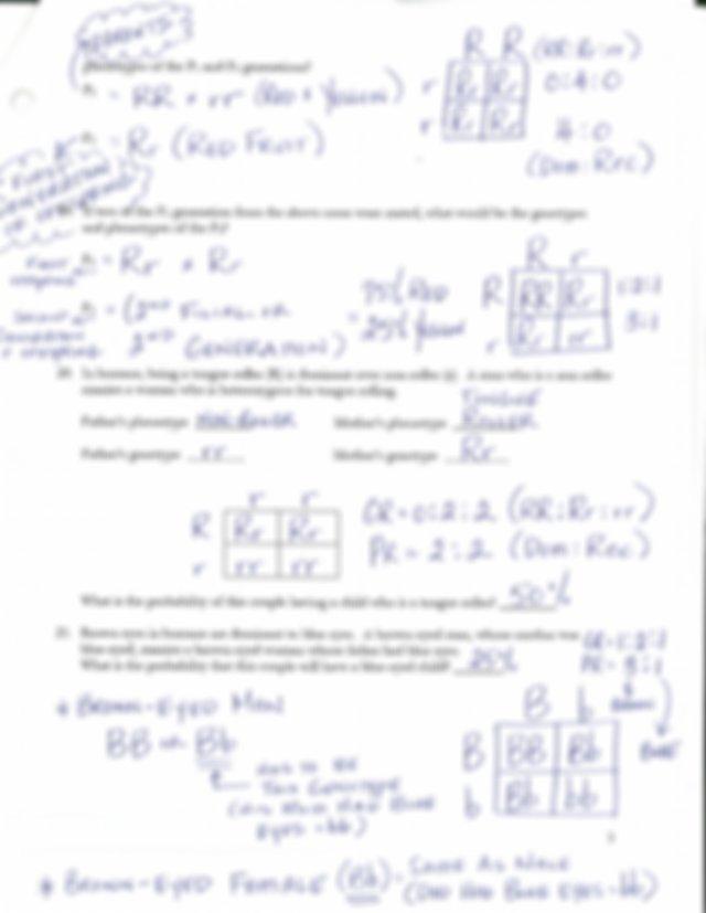 Monohybrid Cross Worksheet - Key.pdf - | Course Hero