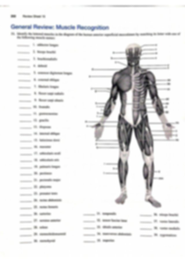 Review Sheet 15 - NAME LAB TIME/DATE Gross Anatomy of the ...