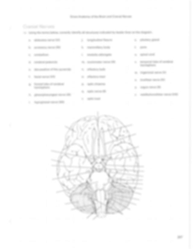 Brain Anatomy Rs