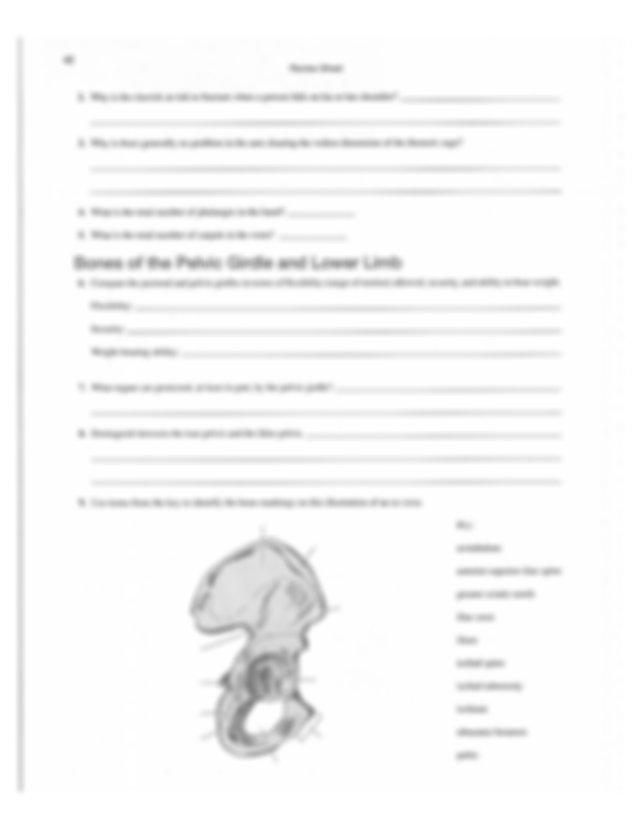 WORKSHEETS 1-3 anatomy lab manual - REVIEW SHEET Surface ...
