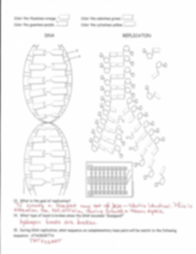DNA Replication Worksheet Answer Key (1).pdf - Name i l E ...