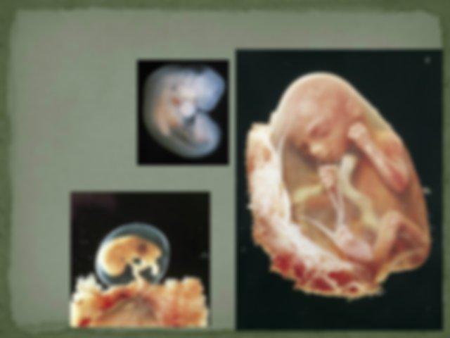 Kivulias Ovulaatio