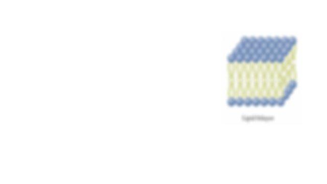 Biology EOC Review - Standards Based (002).pptx - Biology ...