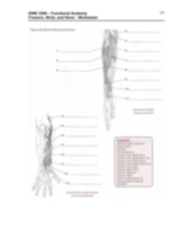 Worksheet - Forearm-Wrist-Hand (PDF Format) (1).pdf - KINE ...