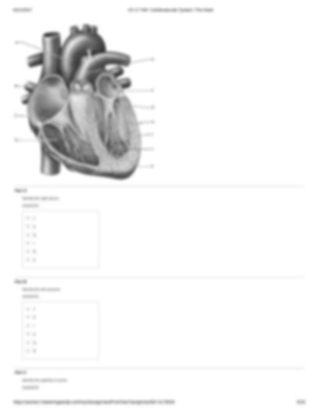 Ch 17 HW: Cardiovascular System: The Heart.pdf - Ch 17 HW ...