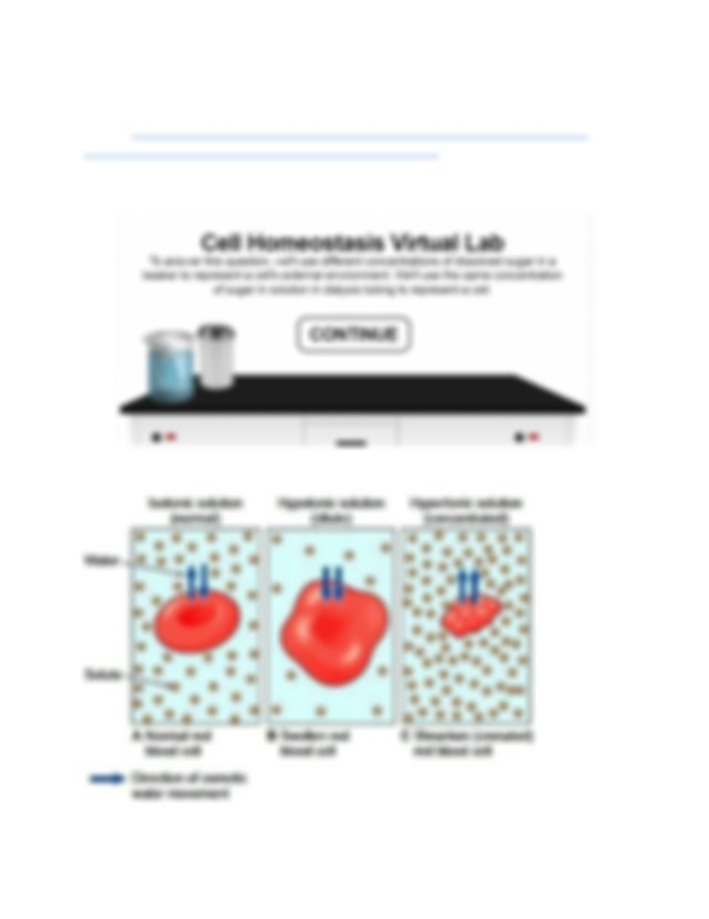 Homeostasis Virtual Lab.docx - Homeostasis Virtual Lab Go ...
