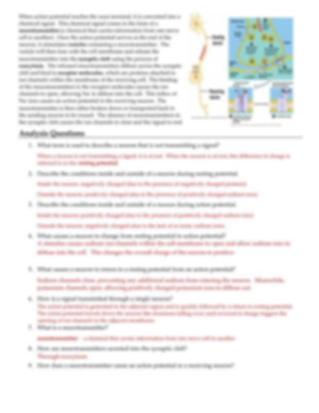 Neuron worksheet .pdf   Course Hero