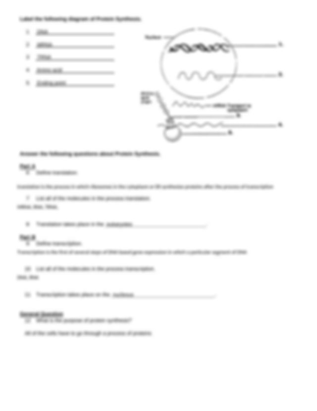 Protein Synthesis worksheet-steps.docx - Name Per Date ...