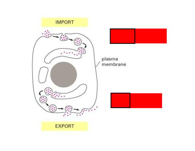 Transport in Cells - Passive vs Active Transport Passive ...