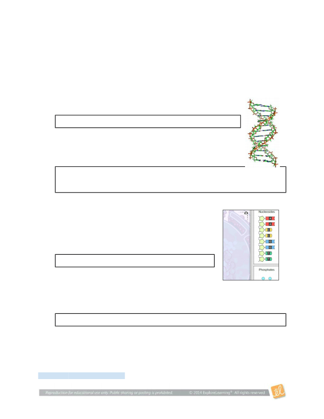 Copy_of_Gizmos_Building_DNA_Activity - Student Exploration ...