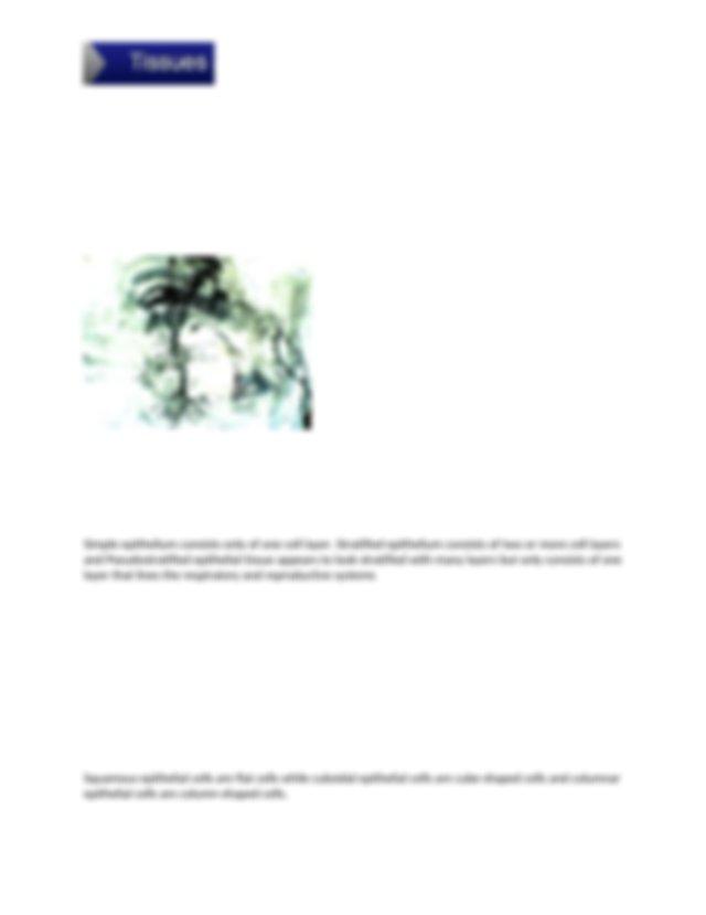 Chp 5 Lab Tissues Report Ashlynn Hill - LAB REPORT ...
