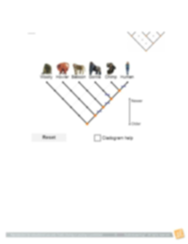 Revise If you have not created a cladogram with the lowest ...