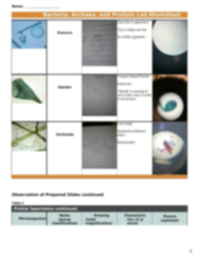 lab 2 .docx - Name Bacteria Archaea and Protists Lab ...