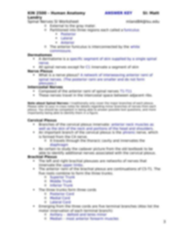 Spinal Cord and Spinal Nerves SI Worksheet - KIN 2500 ...