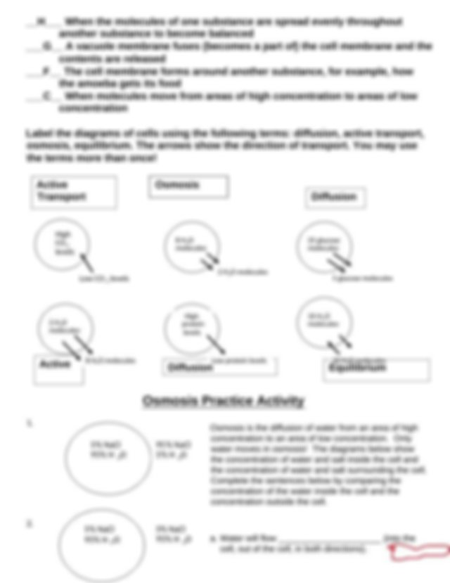 Cell_Transport_Review_Worksheet.docx - Cell Transport ...