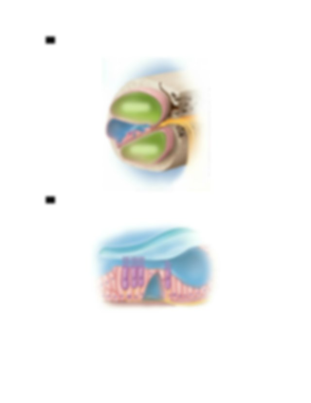 2 Label The Diagram With The Following Terms Cochlea Oval
