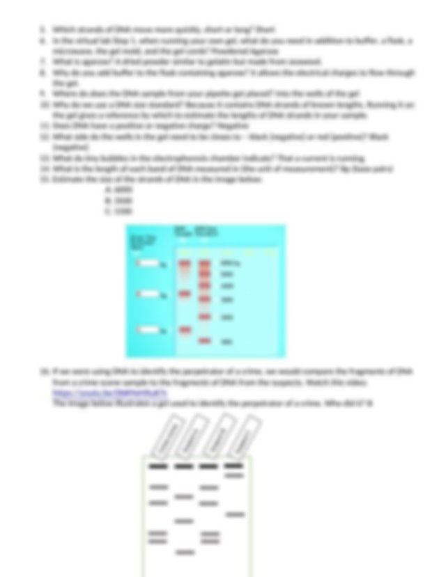 Virtual Lab Electrophoresis and DNA Extraction.docx ...