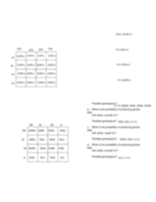 dihybridcrosswksheet.pdf - Dihybrid Cross Worksheet 1 Set ...